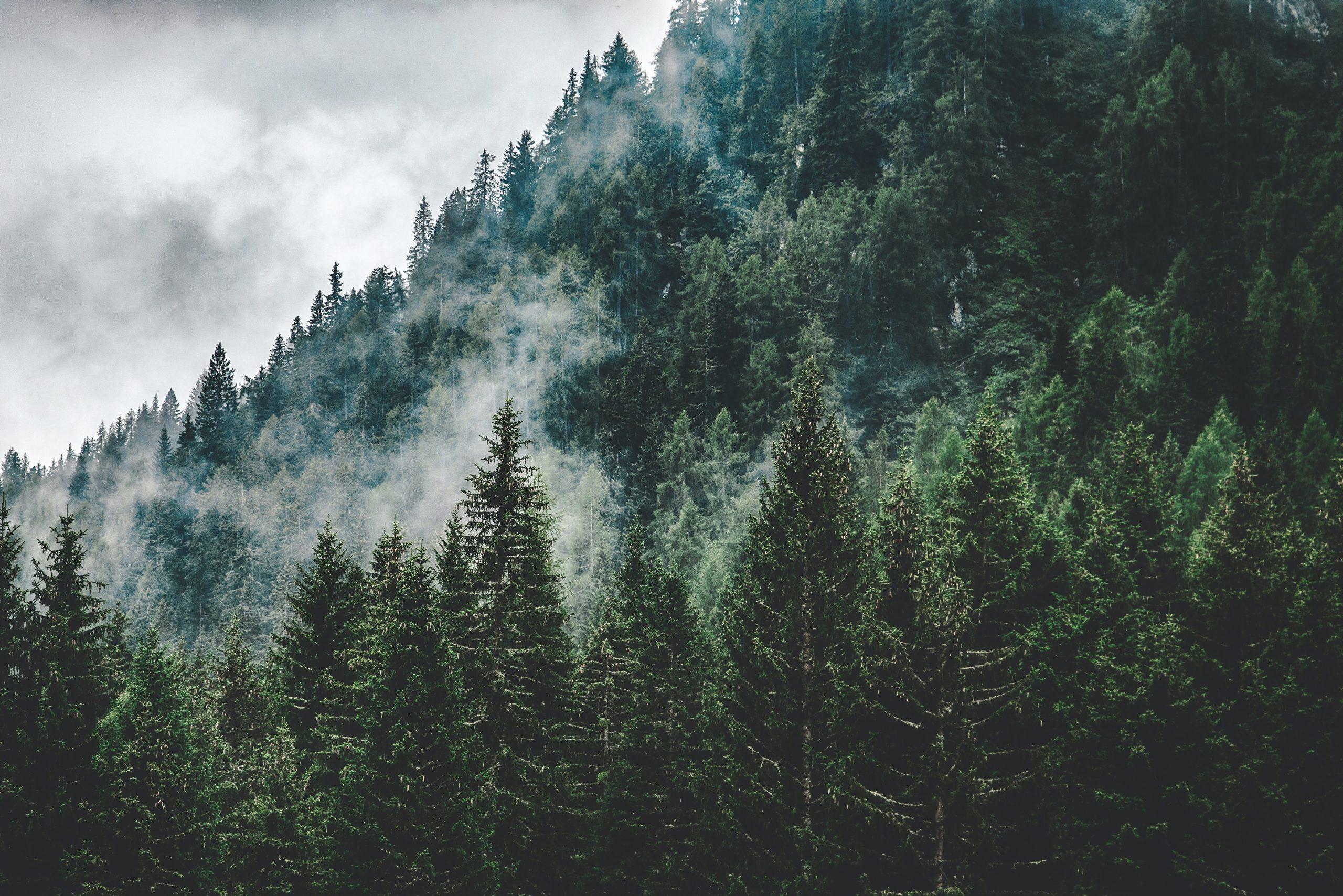 7 kroków do zdrowszego środowiska